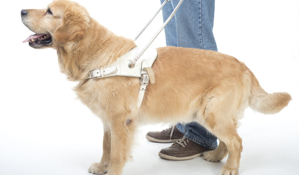 Harness Technology to Monitor Your Dog's Health