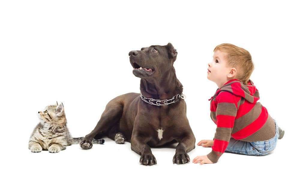 New Proposal Creates Emergency Protocol for Saving Pets