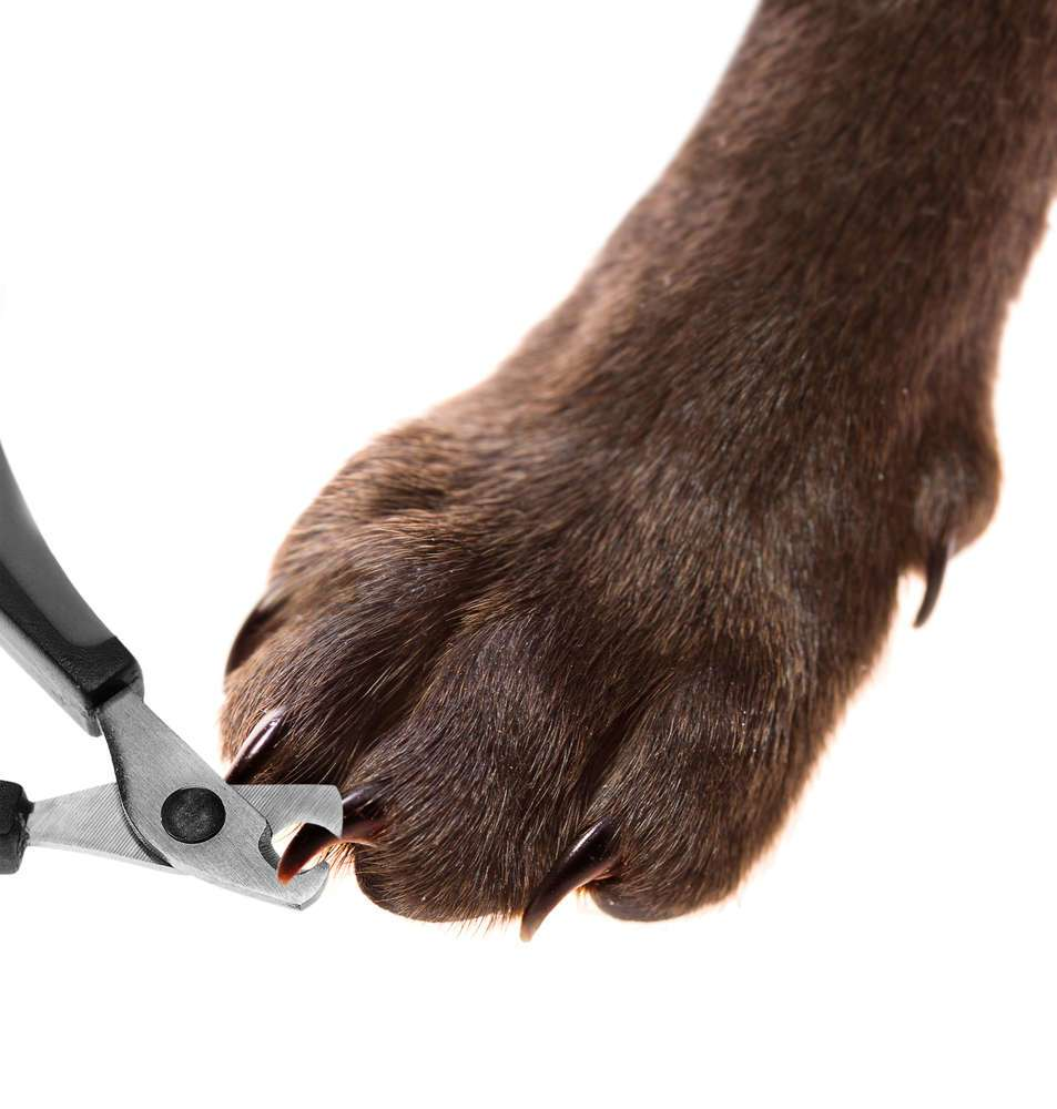 Should You Cut Your Dog's Nails at Home?