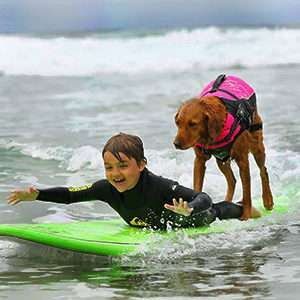 surfing-dog-service-disabled-people-surf-board-ricochet-thumb