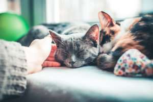 vet-organics-poison-cat-first-aid-tips