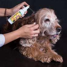EcoRingworm™ Ringworm Spray for Dogs, 4-oz bottle