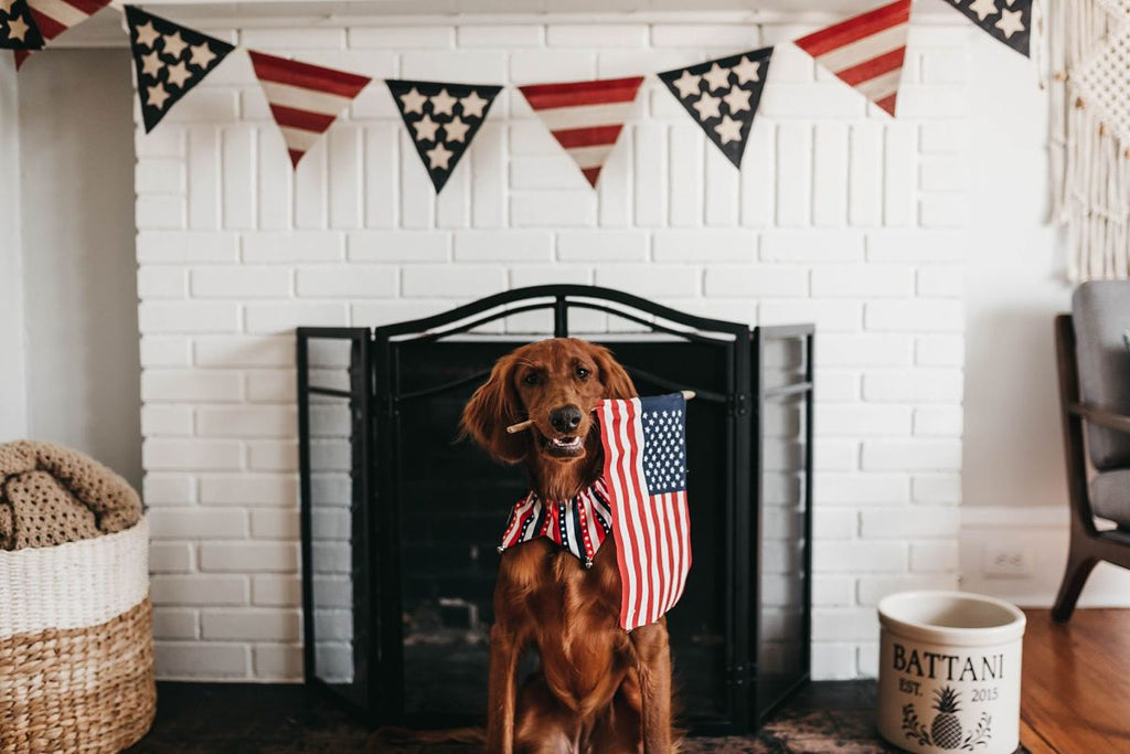 4th of July Dog holding American Flag