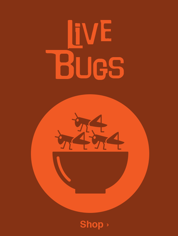 Live Bugs