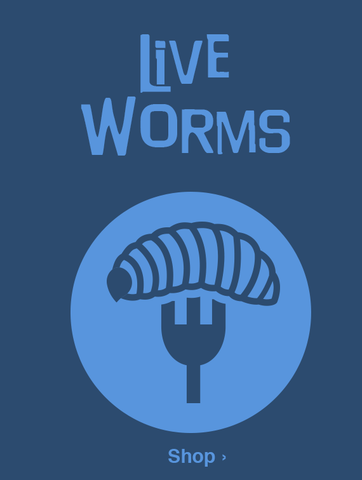 Live Worms