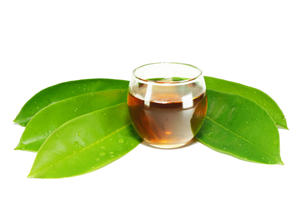 A Complete Guide to Making Graviola Tea and Cooking with Soursop Leaves