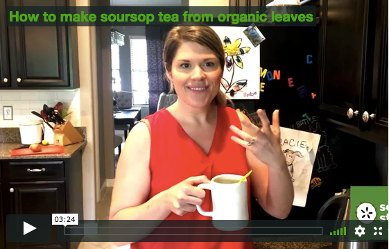 VIDEO: How to make organic soursop tea