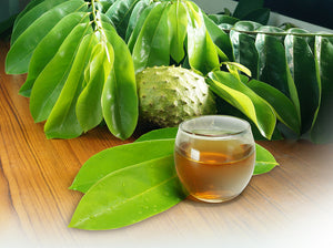 Soursop Tea: Everything you need to know