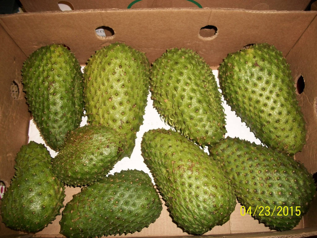 How to handle fresh soursop fruit