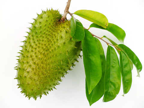 soursop fruit vs soursop leaves