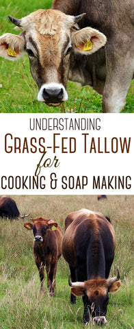 Understanding Grass Fed Tallow for Cooking and Soap Making