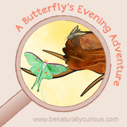 A Butterfly's Evening Adventure