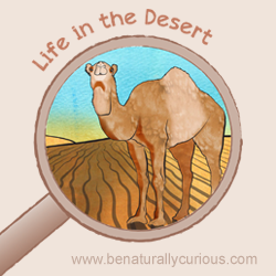 Life in the Desert Printables