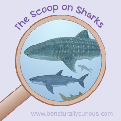 The Scoop on Sharks Printables