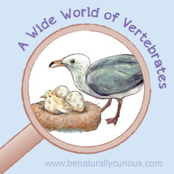 A Wide World of Vertebrates Printables