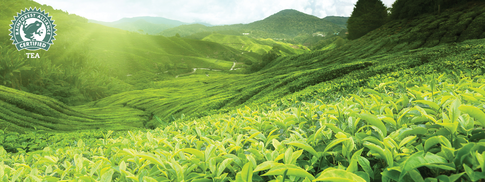 The Tea Company Sustainability