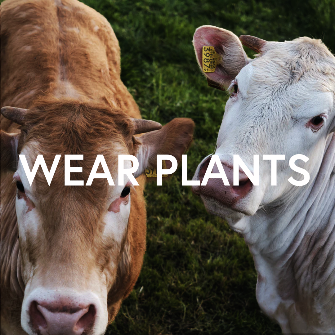 Two Cows saying Wear Plants