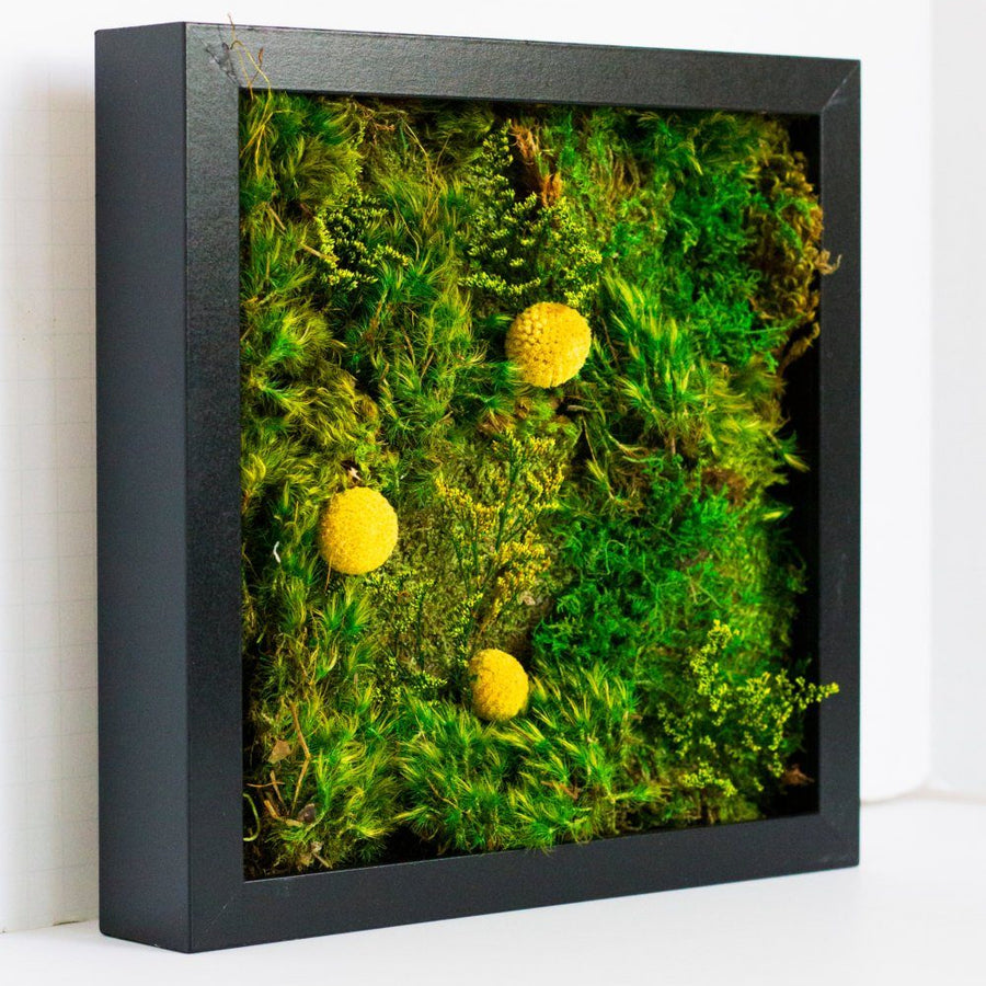 Golden Eye moss art