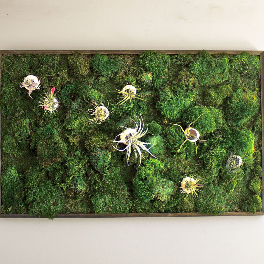 Air Bloom moss art