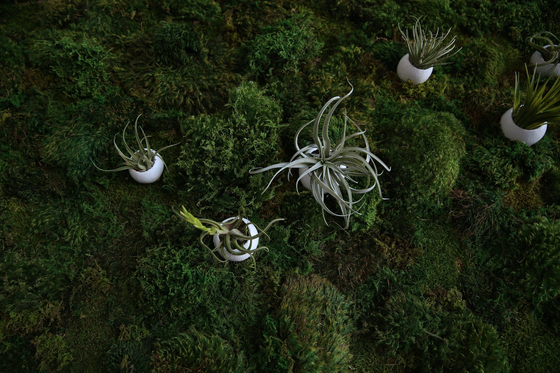 Close up view of kelley's moss art