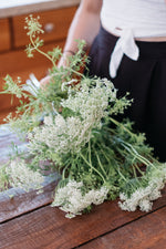 The Urban Legend - Queen Anne's Lace
