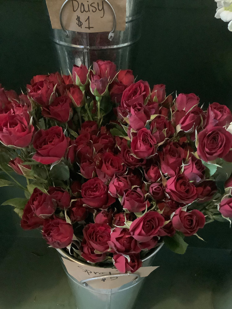 V DAY Spray Roses