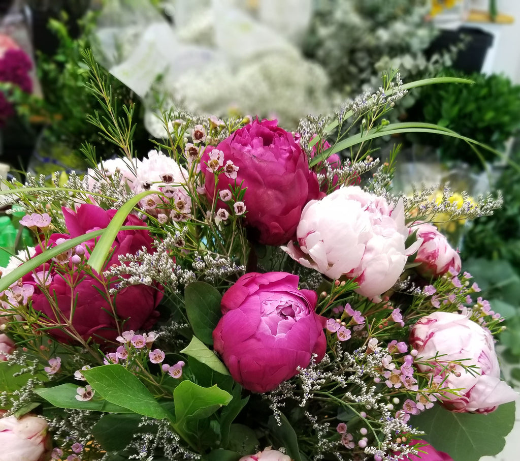 Peony Beauty - Lapeoni Flowers and Events
