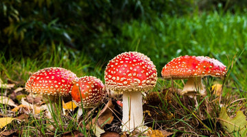 What you need to know about the future of psychedelics
