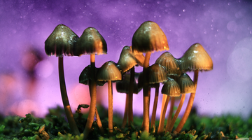 Psychedelics might be legalized sooner than you think