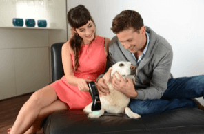 b - cure laser vet. laser therapy for arthritis and chronic pain - Healtop