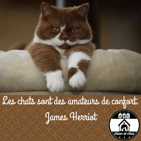 Les chats sont des amateurs de confort. James Herriot