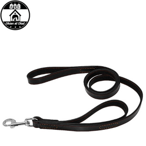 collier chien cuir poignee molosse
