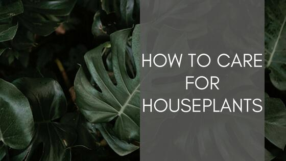 Style Lane article on how to care for houseplants | Scandiscapes