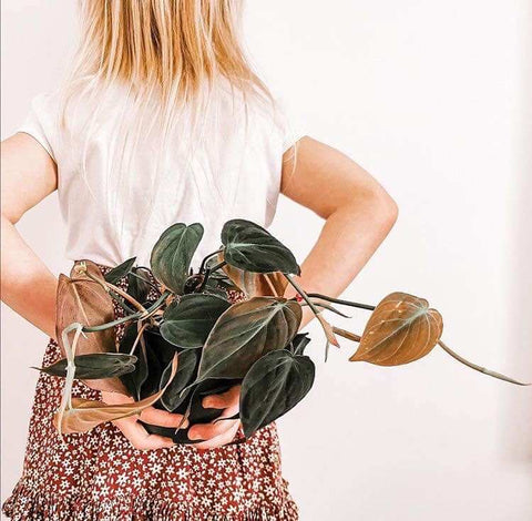 Girl holding a philodendron micans