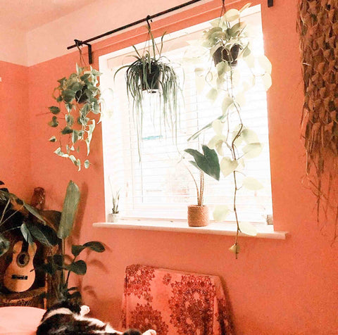 Plants hanging from a curtain rail