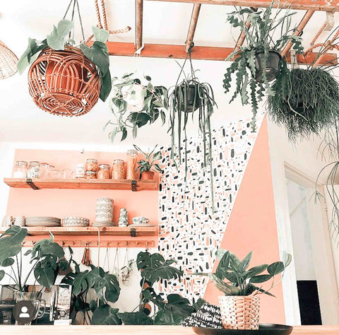 Ladder hanging from a ceiling, covered in plants