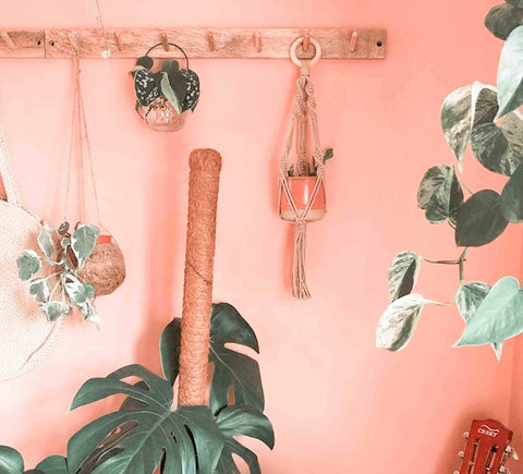Coat hooks as plant display