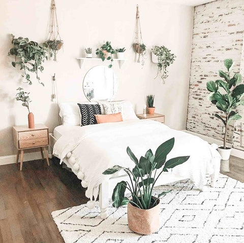 Plants hanging on a bedroom wall