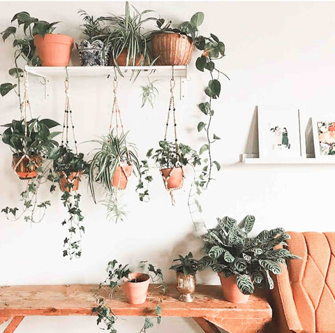 Plant display with a shelf