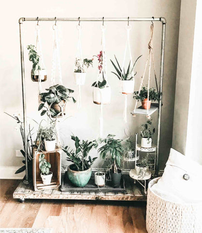 Plants hanging from a clothes rail