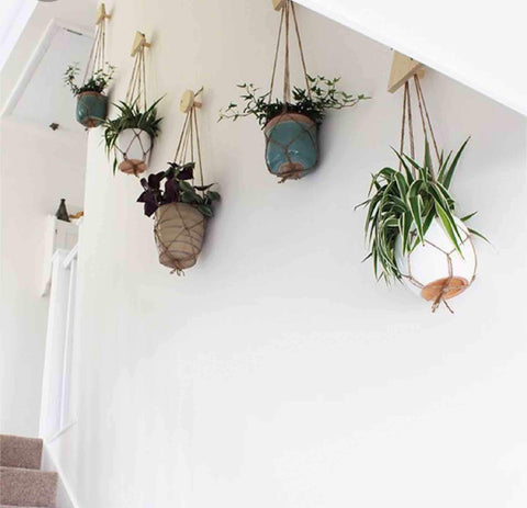 Planters hanging from hooks on wall