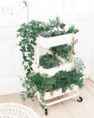 Ikea Raskog trolley filled with plants