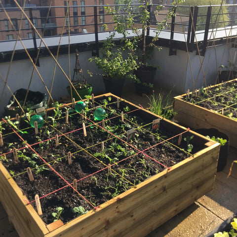 Newly built raised beds on London roof