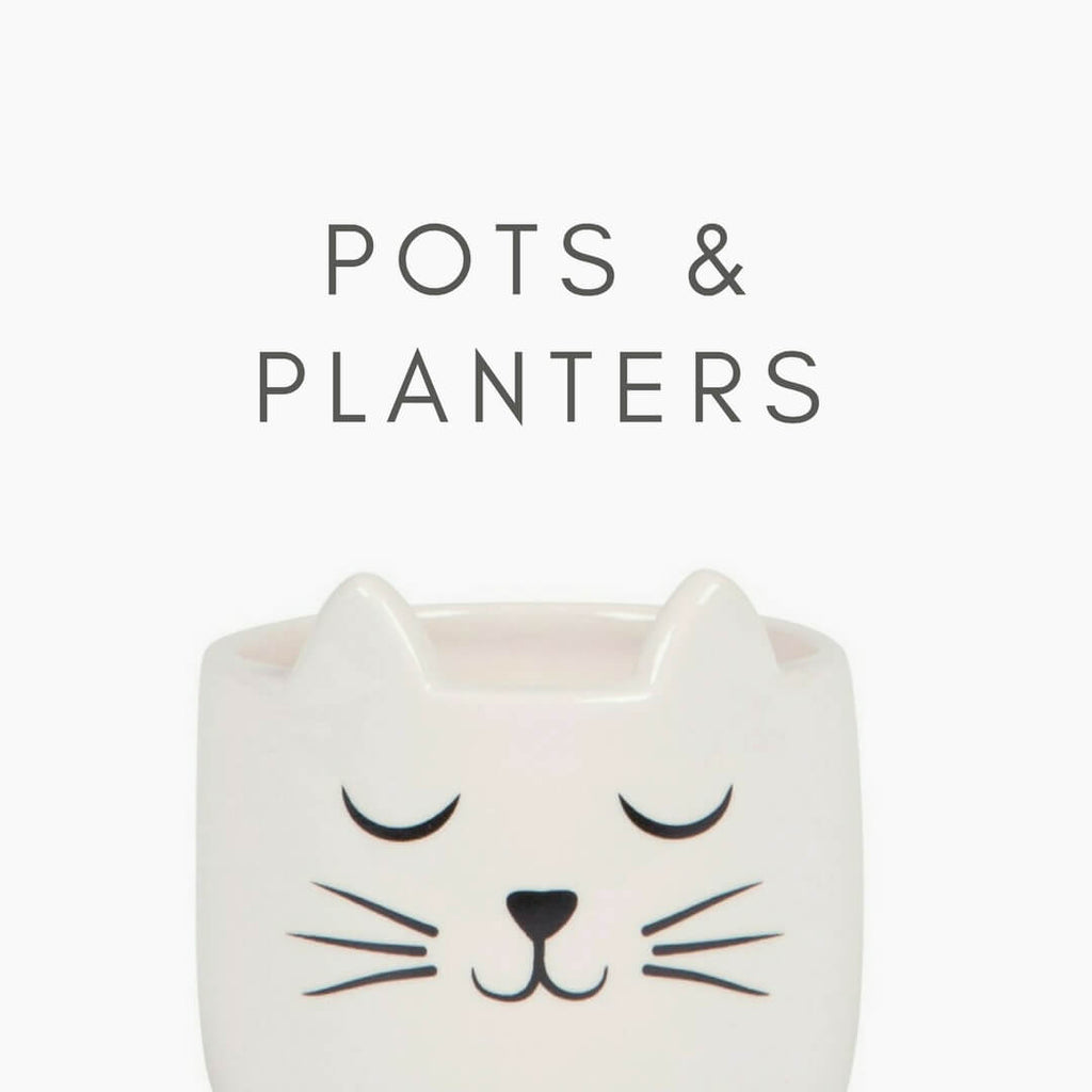 "Image of the mini kitty planter with text ""Pots & planters"""