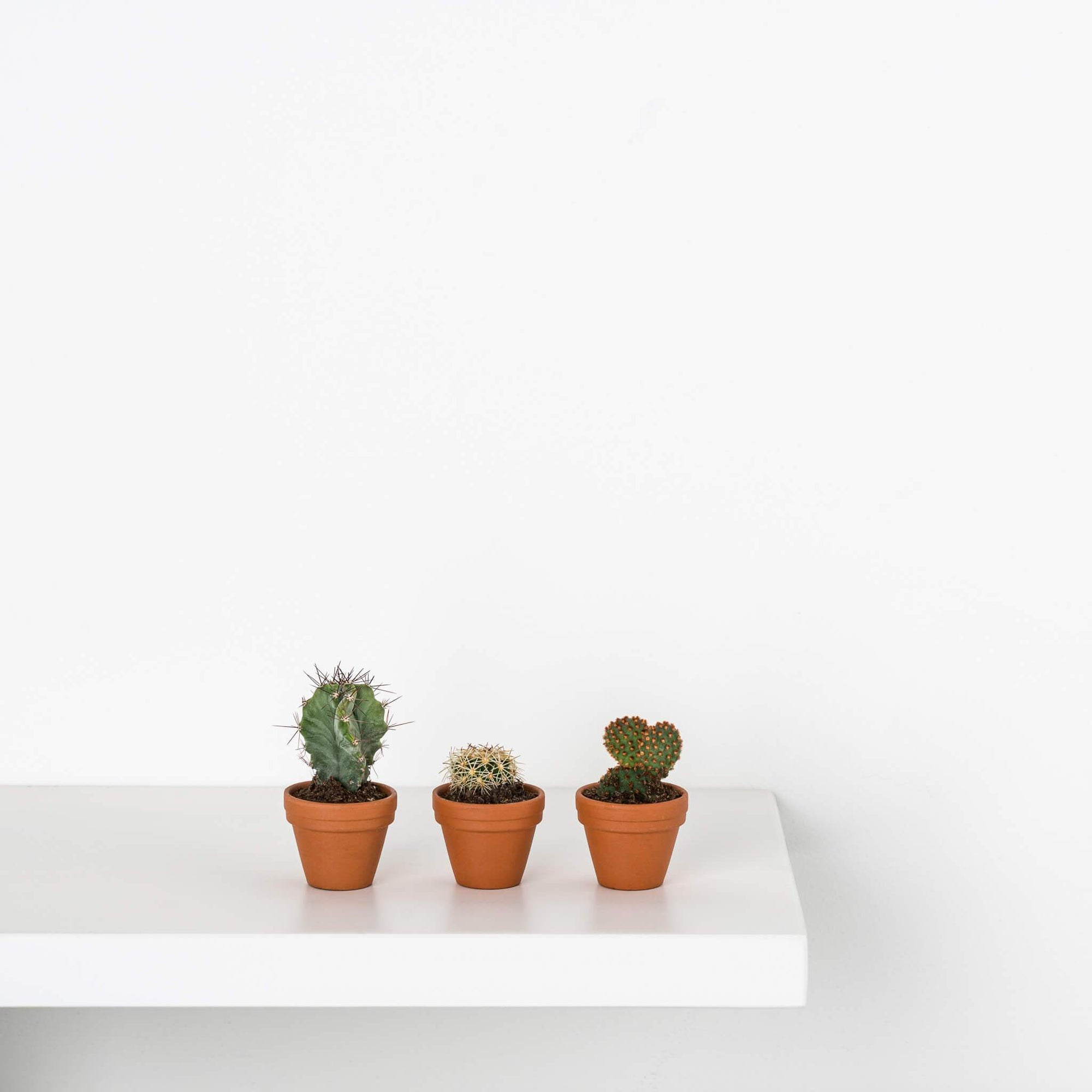 3 teeny cacti in terracotta - Scandiscapes