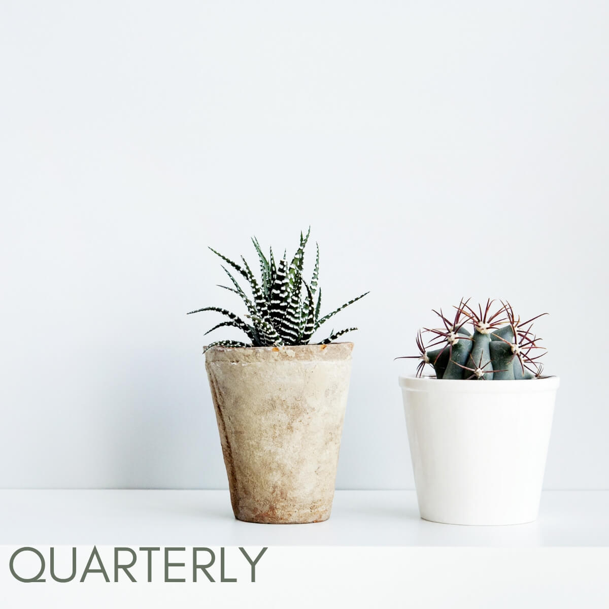 Quarterly succulent subscription