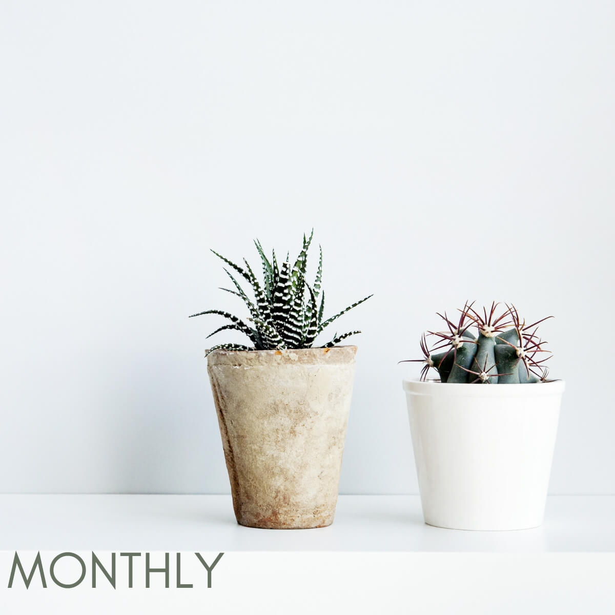Monthly succulent subscription