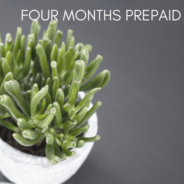 Four months' pre-paid succulent subscription