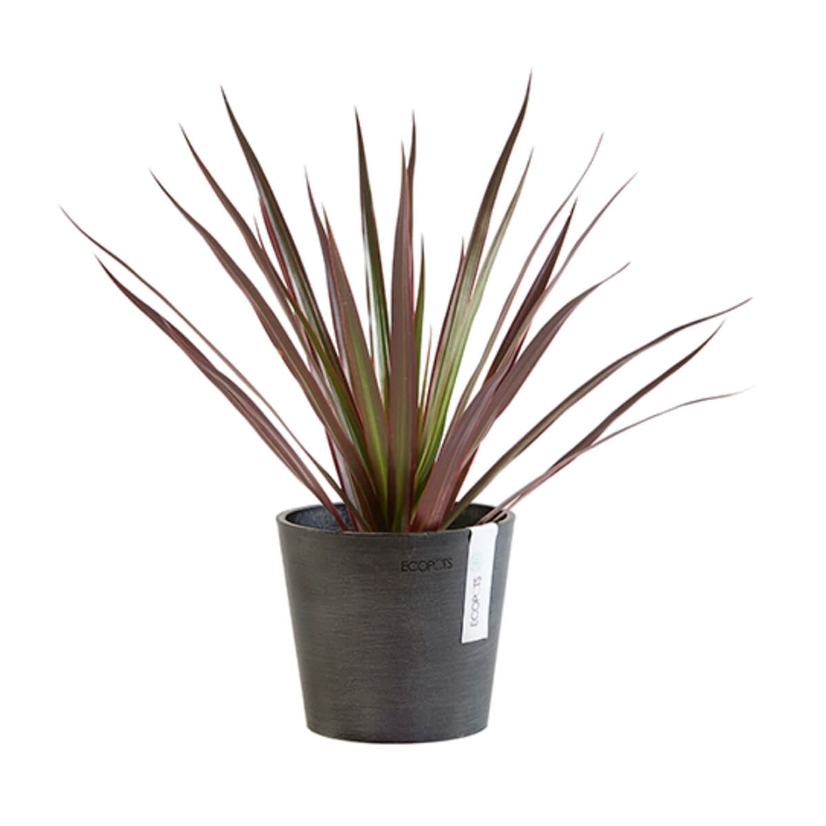 Medium Ecopots Amsterdam pot black with plant