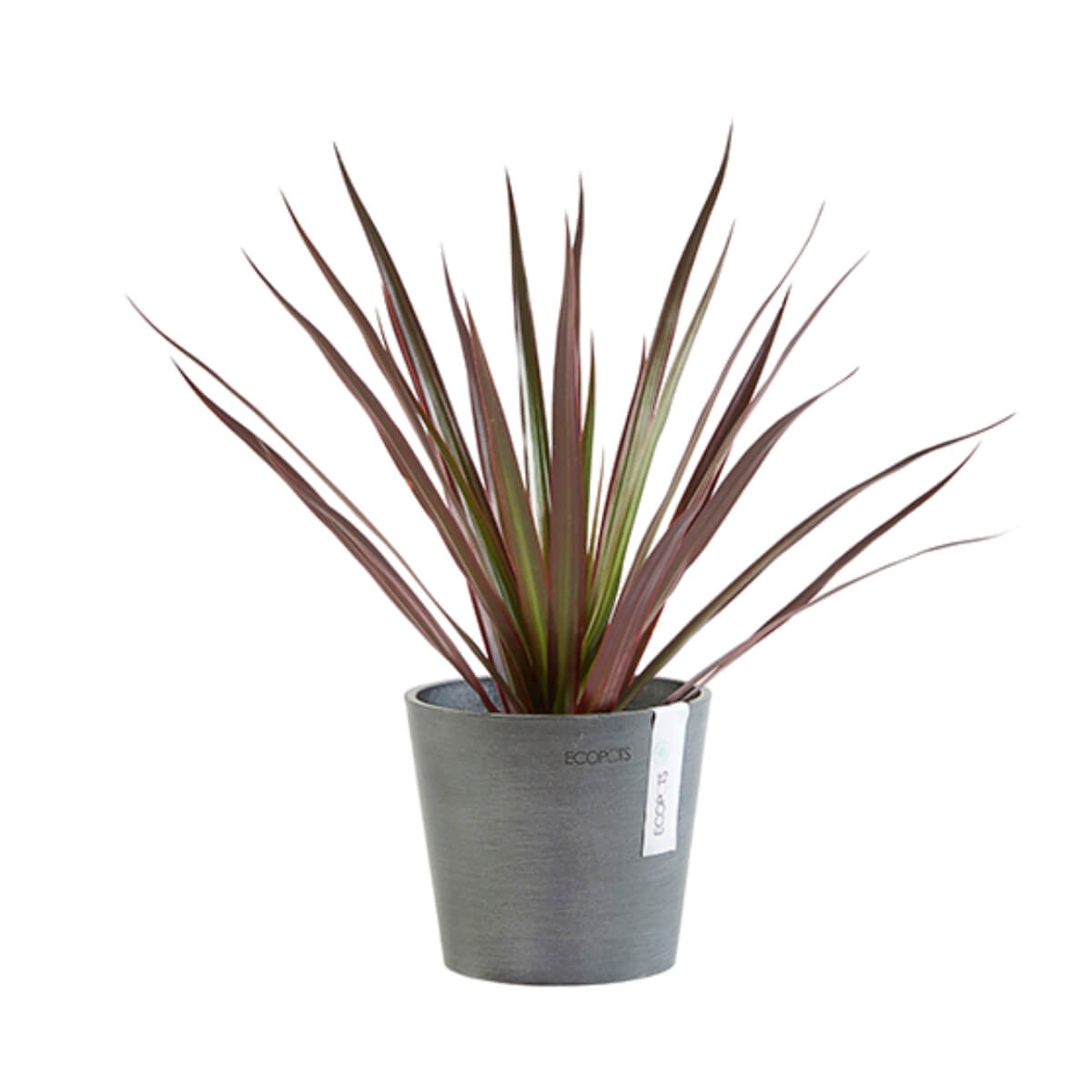 Medium Ecopots Amsterdam pot grey with plant